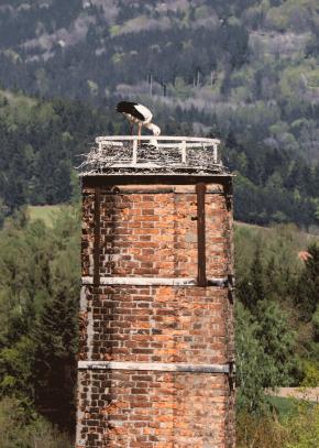 Storchenpaar nistet auf altem Ziegelkamin